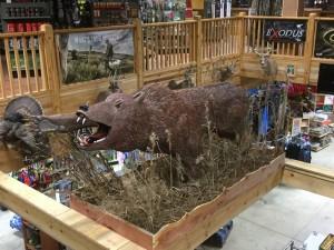 Safford Trading Company bear