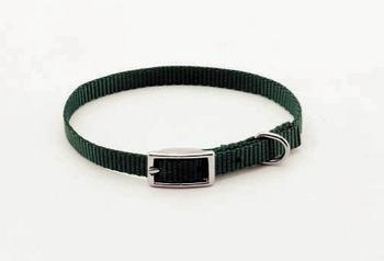 coastal pet small dog collar green