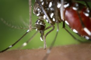 using-bug-repellant-helps-protect-against-viruses-like-zika